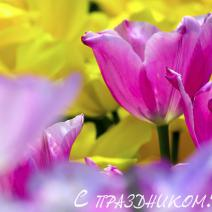 8 марта, женский день календаря, поздравления, международный женский день